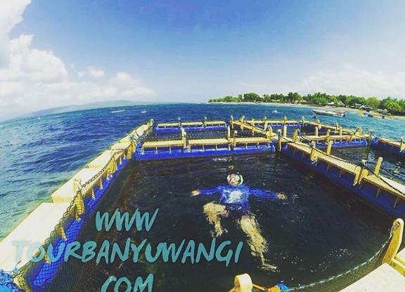wisata banyuwangi 2h1m, wisata bangsring underwater banyuwangi, alamat pantai bangsring