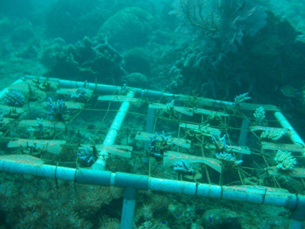 bangsring rumah apung, bangsring underwater, pantai bangsring banyuwangi