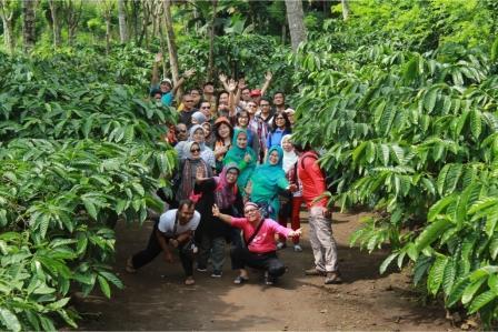 paket travel gathering, perkebunan kaliklatak, agrowisata kebun kopi