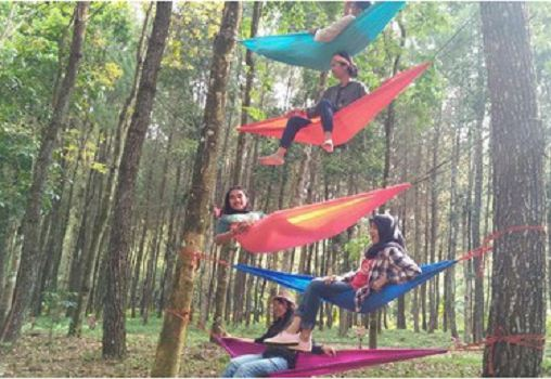 hutan-pinus-songgon-tourbanyuwangi-com-08979671512