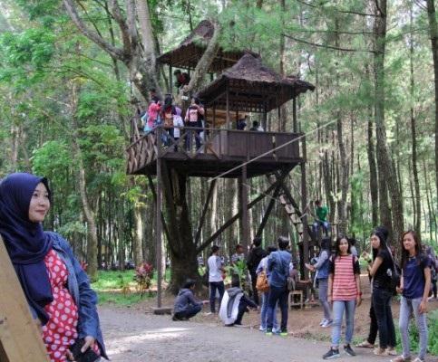 hutan-pinus-songgon-tourbanyuwangi-com-08979671512-2