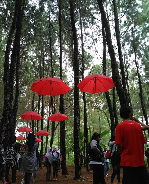 Hutan Pinus Songgon