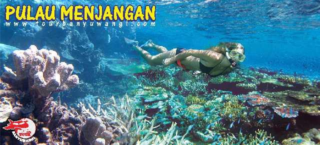 Menikmati Surga Bawah Laut Wisata Pulau Menjangan dari Banyuwangi