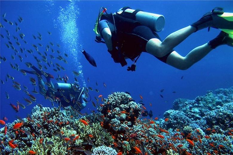 open trip pulau menjangan, harga paket wisata pulau menjangan, open trip menjangan