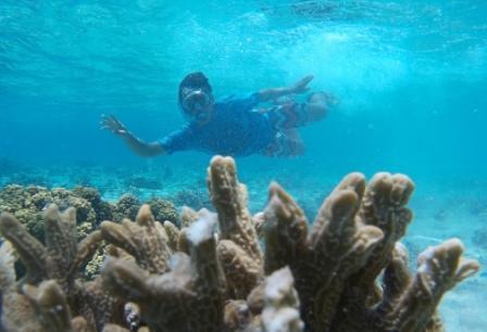 paket pulau menjangan, travel pulau menjangan, harga paket wisata pulau menjangan