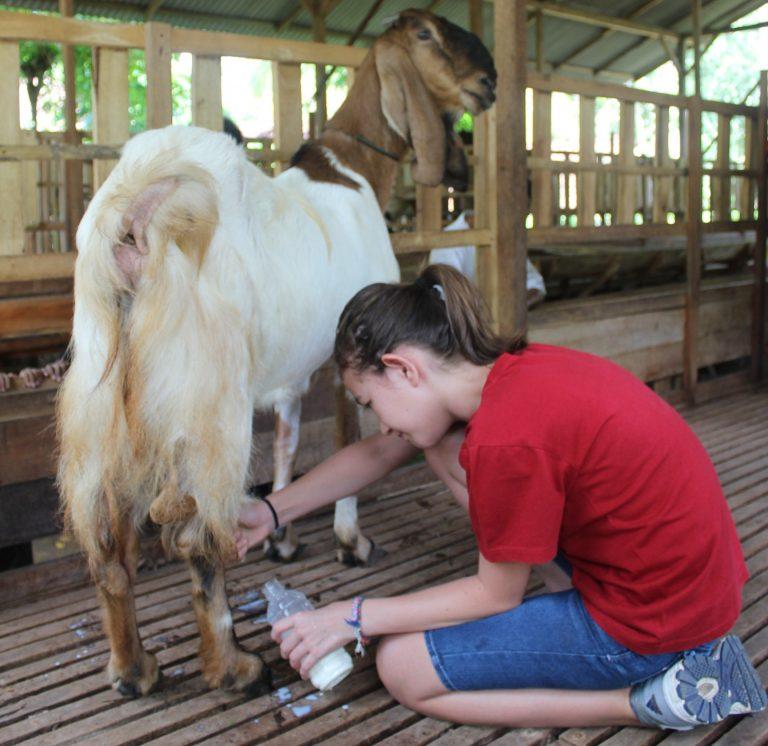 wisata peternakan kambing, wisata edukasi kambing etawa, peternak kambing etawa banyuwangi