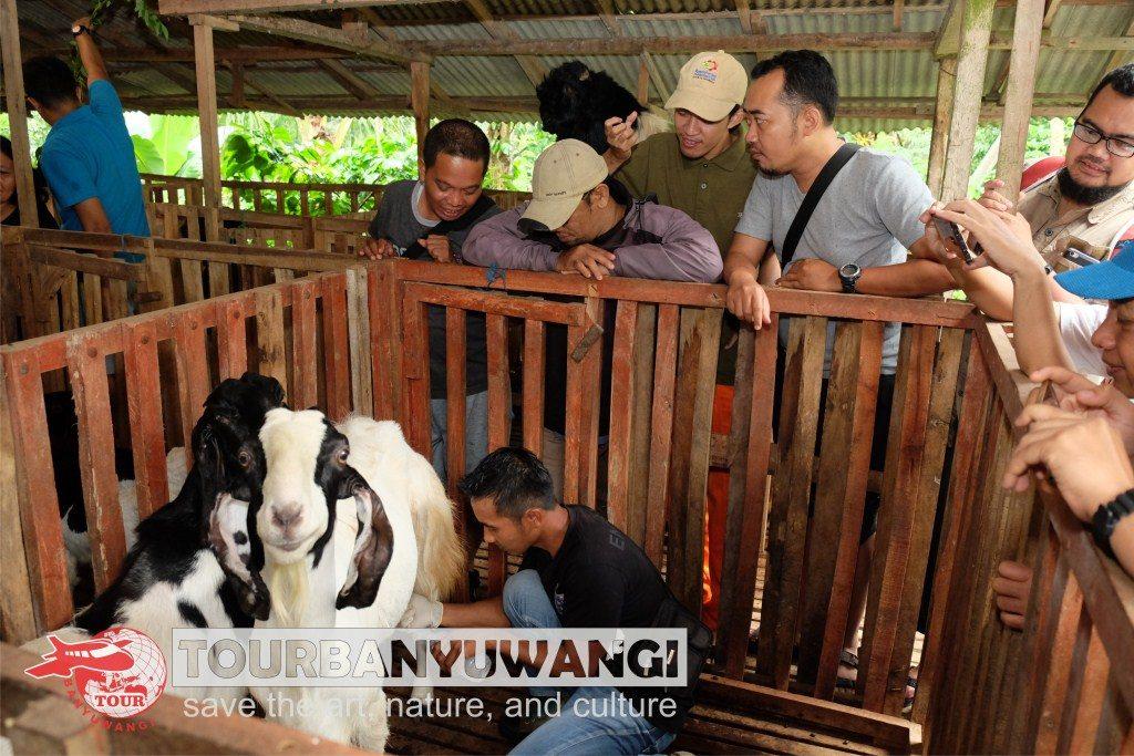 Paket Wisata Banyuwangi 2 Hari 1 Malam, Wisata Seni Budaya Banyuwangi, wisata kebun kopi