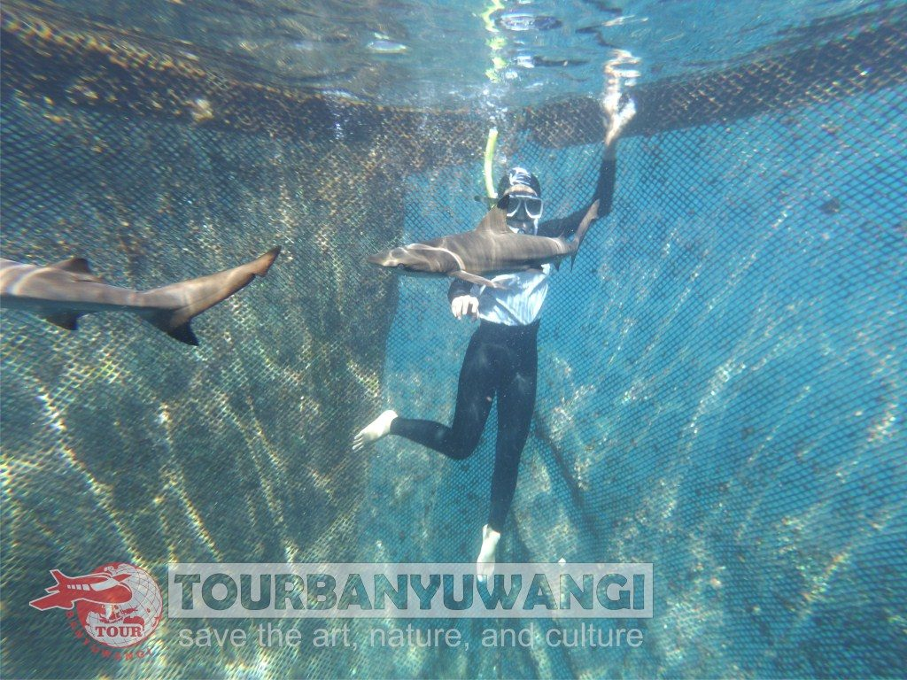Paket wisata Banyuwangi 2 Hari 1 Malam, Destinasi wisata Banyuwangi, Bangsring underwater Banyuwangi