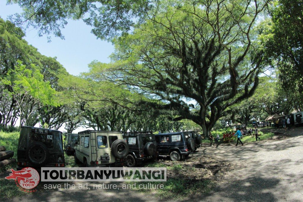 Paket Gathering Kantor, objek wisata di Banyuwangi, Hutan Jawatan Benculuk