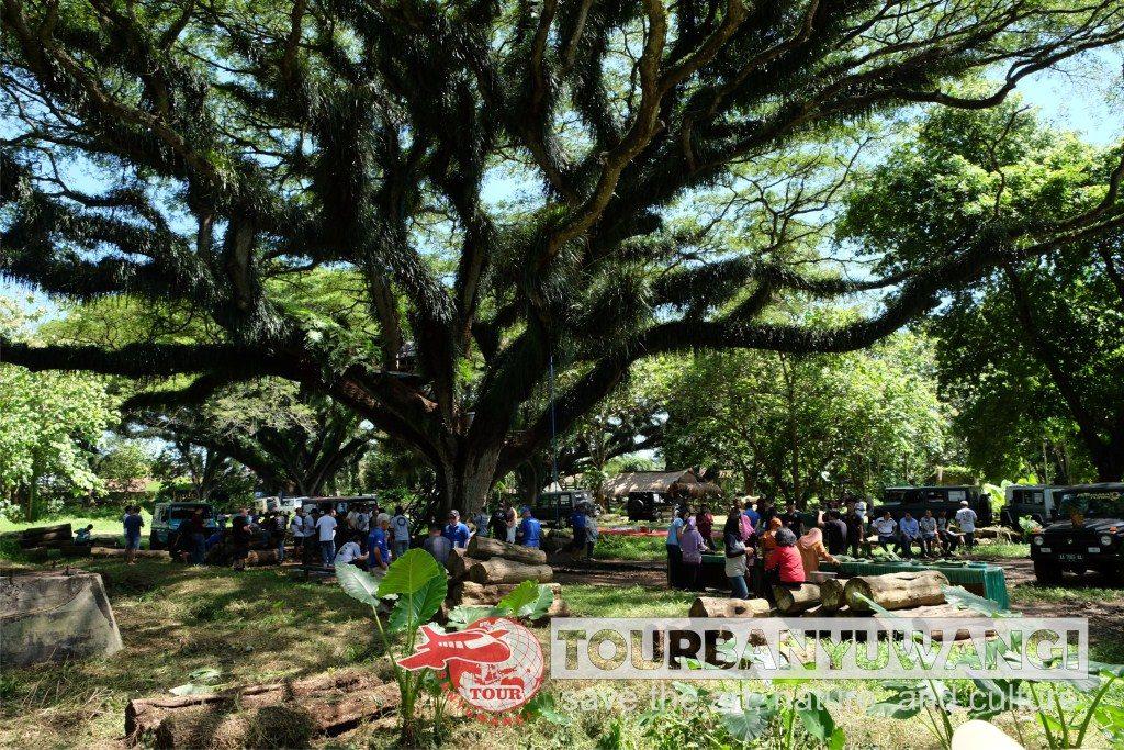 Paket Wisata Banyuwangi 2H1M Jelajah Valuable Tour, Destinasi wisata Banyuwangi, Jawatan Benculuk