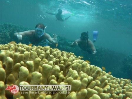 Open Trip Pulau Menjangan, paket wisata ke pulau Menjangan, objek wisata pulau Menjangan