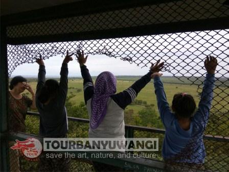 open trip Kawah Ijen dan Taman Nasional Baluran, Tujuan wisata Banyuwangi, wisata Taman Nasional Baluran