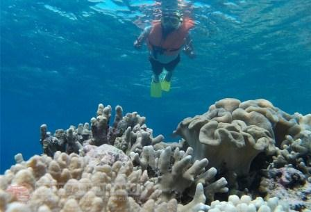Shared Tour to Menjangan and Tabuhan Island, Backpacking Indonesia, Menjangan underwater