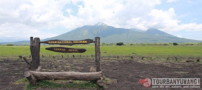 Backpacking Trip: Shared Tour to Ijen Crater and Baluran National Park