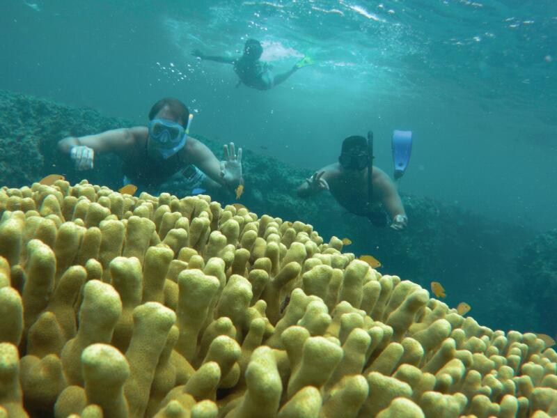 paket wisata pulau menjangan, trip pulau menjangan, tour pulau menjangan