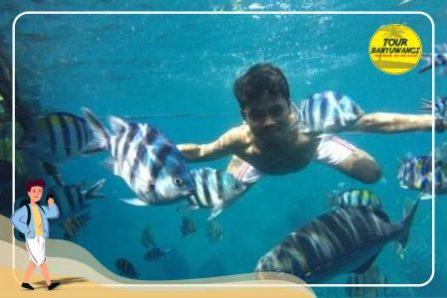 paket wisata banyuwangi 1h1m, bangsring underwater, snorkling bangsring