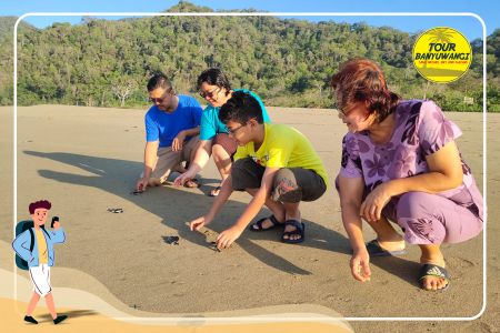Paket Wisata Banyuwangi 2 Hari 1 Malam, Pantai Sukamade Banyuwangi, Penyu Banyuwangi