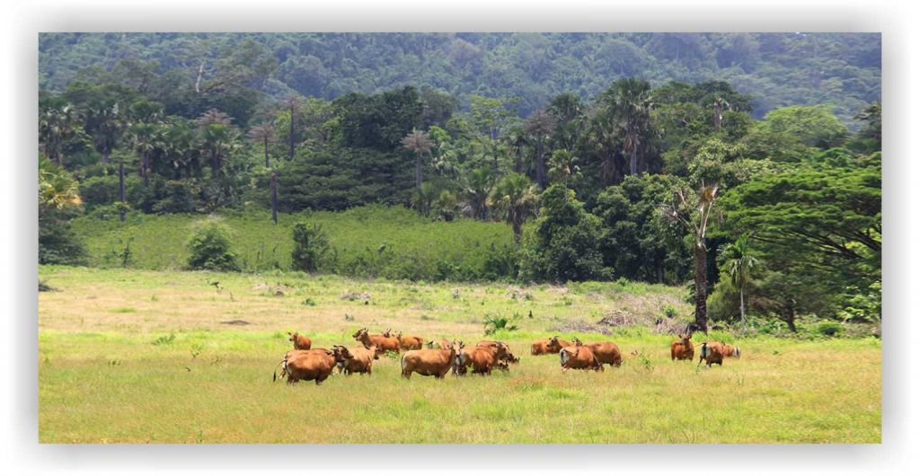 satwa di alas purwo, taman nasional alas purwo