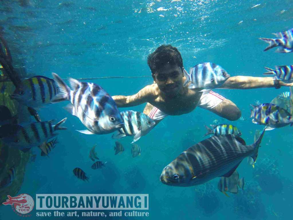 snorkeling bangsring, pantai bangsring underwater, wisata bangsring