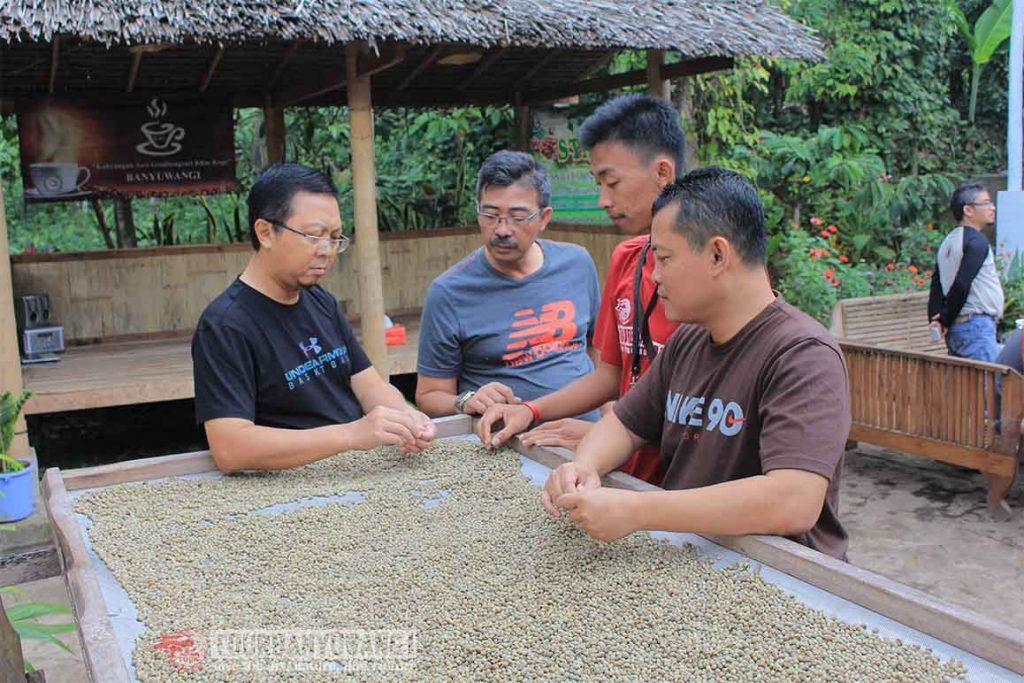tour kebun kopi, wisata kebun kopi Banyuwangi, tour kebun kopi