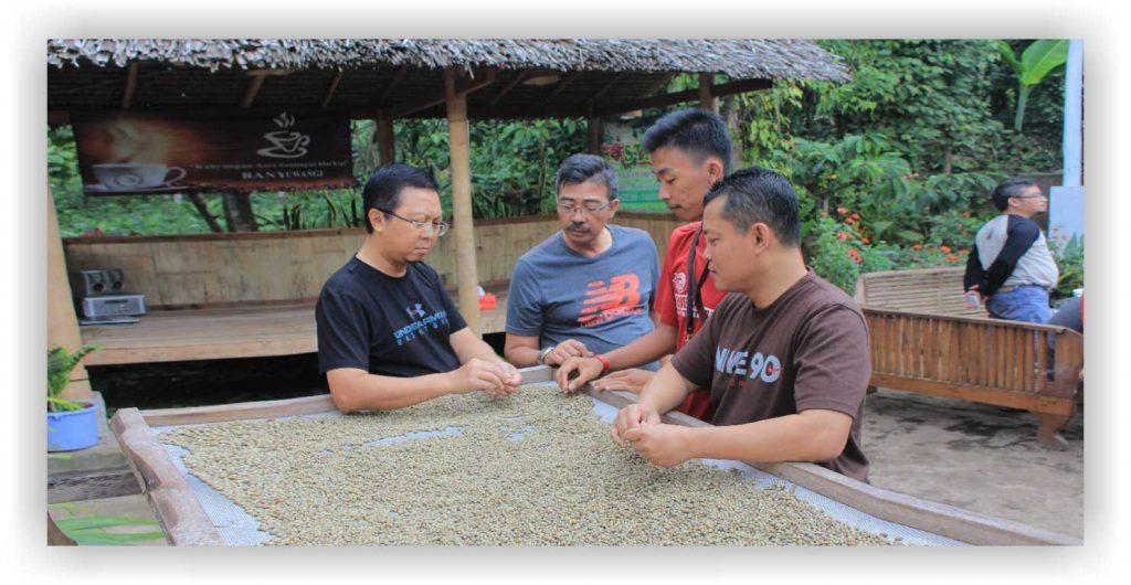 Wisata edukasi kopi, kampong kopi kahyangan, perkebunan kopi banyuwangi