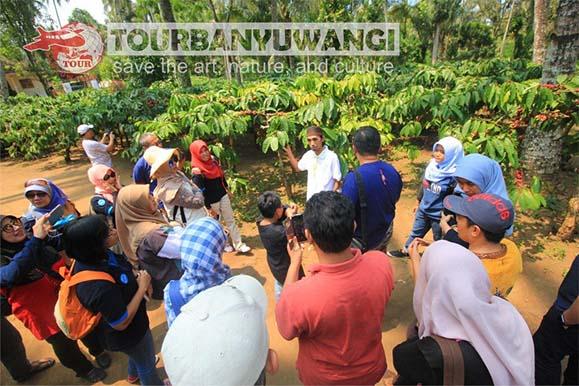 Paket Wisata Banyuwangi 3H2M, destinasi wisata banyuwangi, Kampong Kopi Lerek Gombengsari