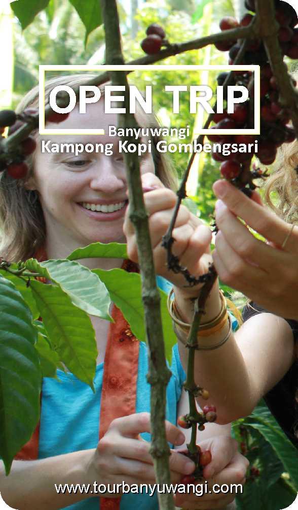 Open trip banyuwangi murah, edukasi kopi, wisata kebun kopi