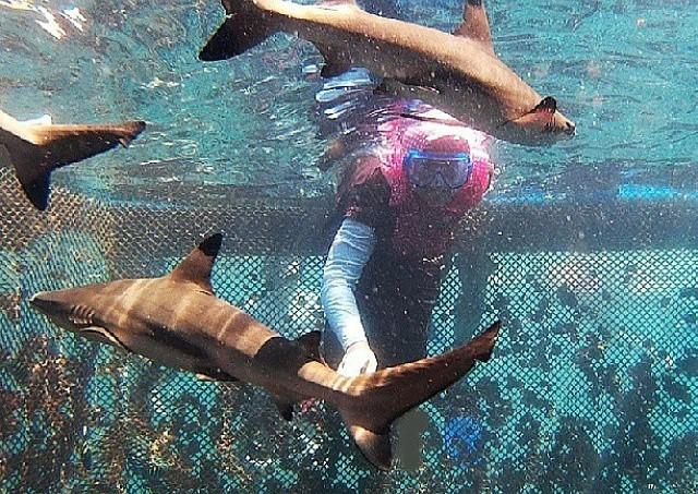 bangsring underwater, banyuwangi bangsring, tour banyuwangi