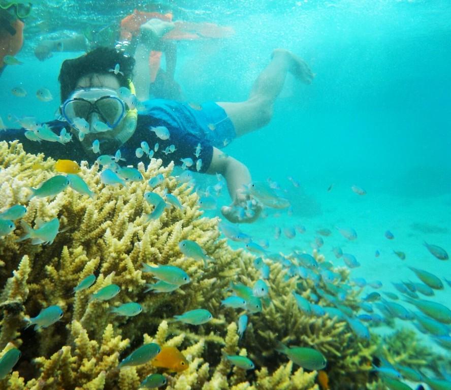 Paket Snorkeling Pulau Menjangan Paket Wisata Banyuwangi