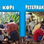 Paket Tour Kebun Kopi dan Edukasi Kambing Ettawa