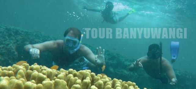 Open Trip Pulau Menjangan, Paket Wisata Menjangan Murah
