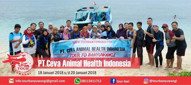 PT. Ceva Healt Animal Jakarta Tour To Banyuwangi With Tour Banyuwangi